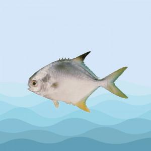 ماهی پرستو