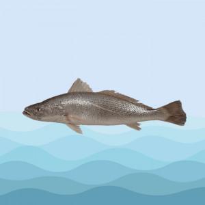ماهی شوریده