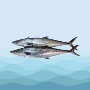 ماهی بچه شیر