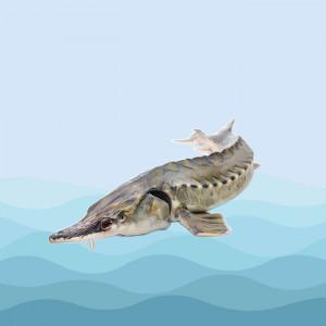 ماهی ازون برون