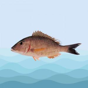ماهی سنگسر شهری