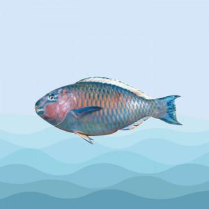ماهی طوطی