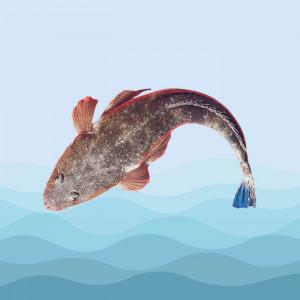 ماهی زمین کن